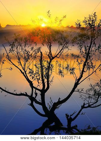 Silhouette of lonely tree growing in a pond at sunrise. Dusk time