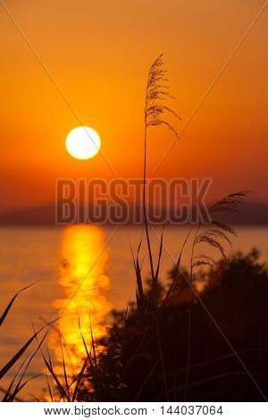 Sunset in Sithonia with grass Chalkidiki Greece