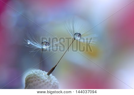 Abstract macro photo with water drops. Dandelion seed.Artistic Background for desktop.