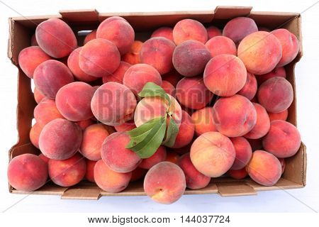 Fresh Picked Peaches. Isolated on white with room for your text.