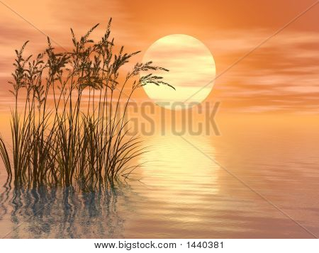 Grass_Sunset_Mid