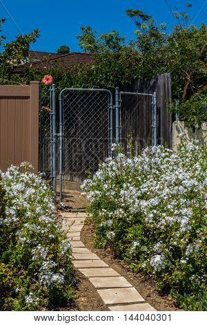 garden gate pathway and flowers at sunny day