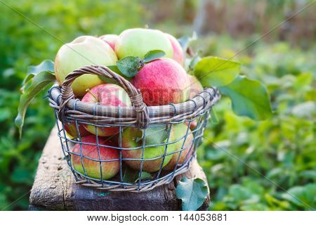 Fresh ripe apples in the basket. Organic fruit and vegetables.