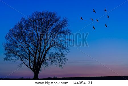 Beautiful autumn sunset or sunrise with copy space panoramic view