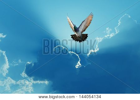 Dove in the air over dramatic sky concept of religion and peace