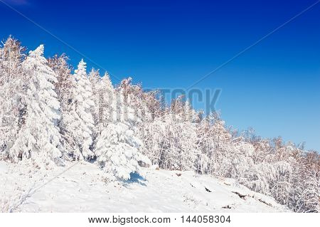 Snow-covered Trees Against The Blue Sky