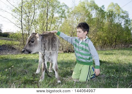 In the summer on the a little boy petting a calf.