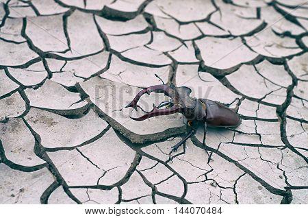 beetle deer on dry land vintage toning