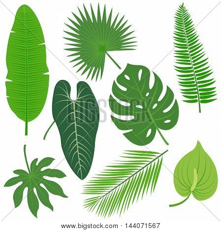 Tropical plant exotic leaves vector illustration collection.