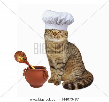 Scottish Straight cat cook in chef hat.
