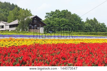 Furano Hokkaido Japan - July 30 2015: Various colorful flowers fields in front of greenhouse and many tourists in the background at Tomita Farm a famous tourist attraction of Furano Hokkaido.