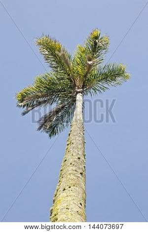 tall palm tree in the hot sun with the blue sky as a background