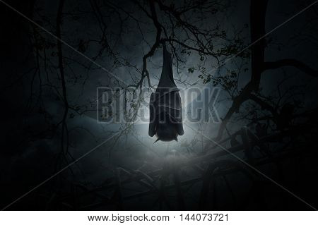 Bat sleep and hang on dead tree over old fence moon and cloudy sky Spooky background Halloween concept