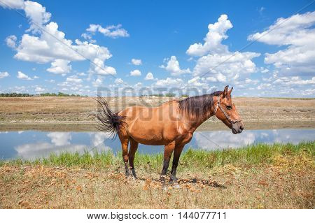 landscape with white clouds and brown horse near water