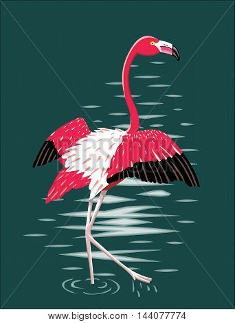 Flamingo - Vector illustration - EPS .