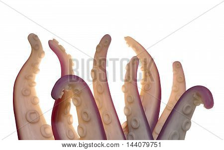Monster Tentacles Isolated