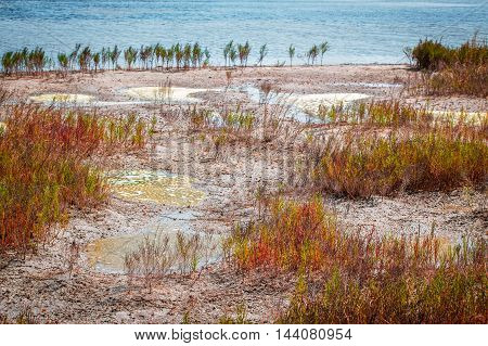 Marshland near salt lake, puddles with dirty weedy water on the lakeshore, waterlogged area