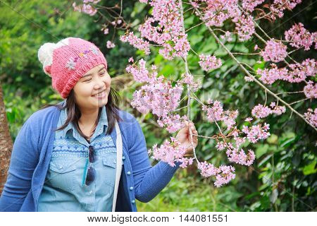 Portrait of beautiful Thai woman tourist in a spring cherry blossom garden Chiang mai.