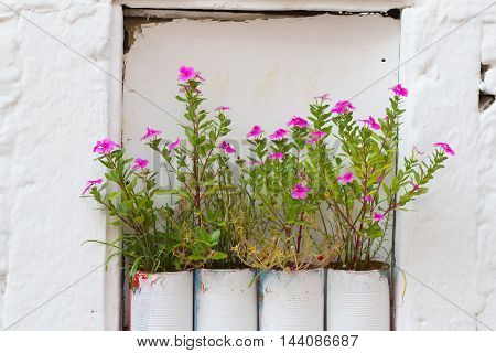pink flowers in white tin cans on a white wall