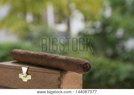 One cigar lies on the box with green leaves as background