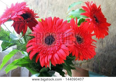 Red Daisy. Background