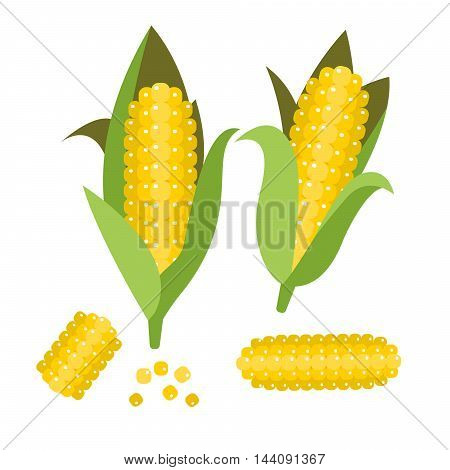 Corn vector illustration. Maize ear or cob. Yellow sweetcorn and seeds.