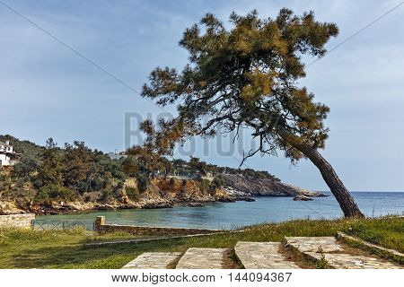 Seascape with tree in Archaeological site of Aliki, Thassos island,  East Macedonia and Thrace, Greece