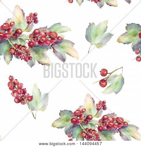 Hand drawn seamless floral pattern with redcurrant over white background painted by watercolour. Endless texture can be used for wallpaper textile pattern fills web page background.