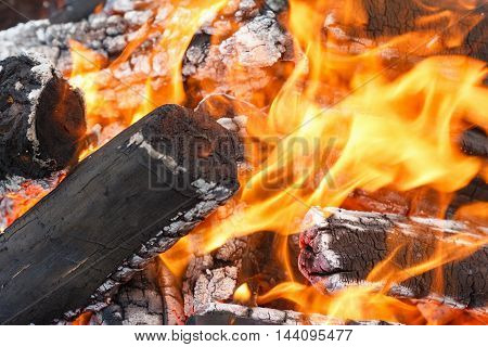 Coals of a campfire for picnic in the forest closeup
