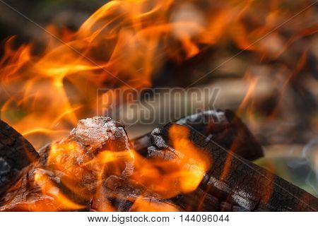Campfire coals for picnic outdoor forest closeup