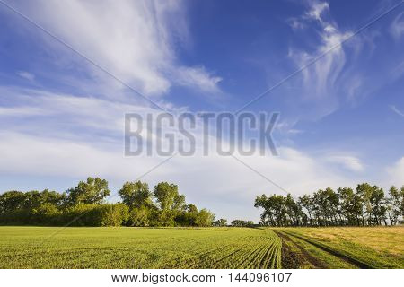 rural landscape with beautiful plumose clouds and the road