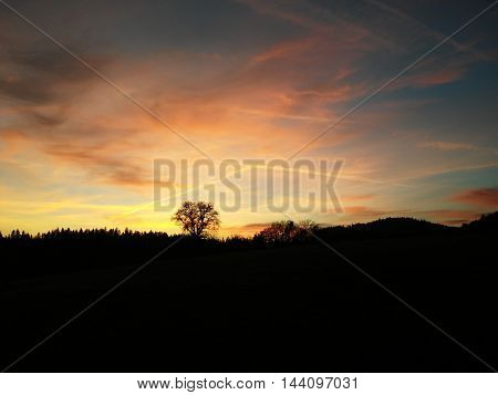 Atmospheric sunset with illuminated tree and forest silhouette on the horizon