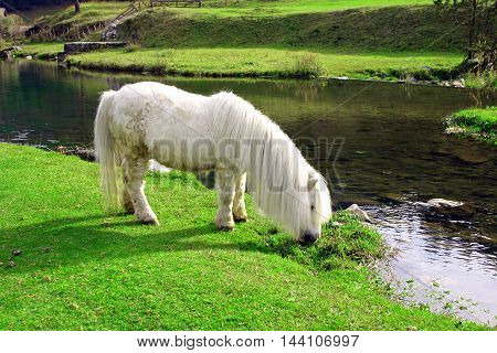 white horse grazes green grass by the river