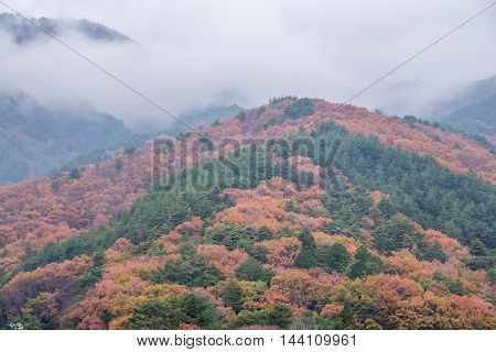 Colorful Autumn Leaf on mountain Season in Japan