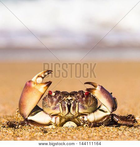 Alien Creature By the Sea