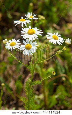 Wildflowers,