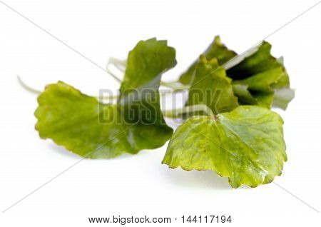 Centella Asiatica Or Thankuni In Indian, Buabok Leaf In Thailand Isolated On White