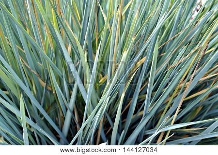 background image blue green grass with sharp ends