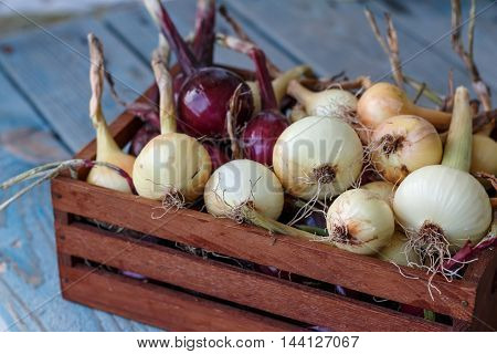 Red and yellow onion in the wooden box.