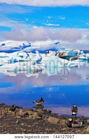 Yokulsarlon Glacial Lagoon in Iceland. Floes floating in the ocean, and polar birds on the shore of the ocean lagoon