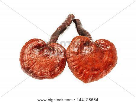 Ganoderma Lucidum Mushroom Isolated On White Background