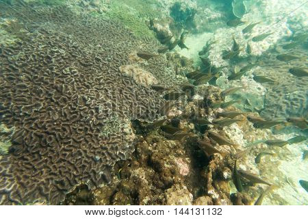group of coral