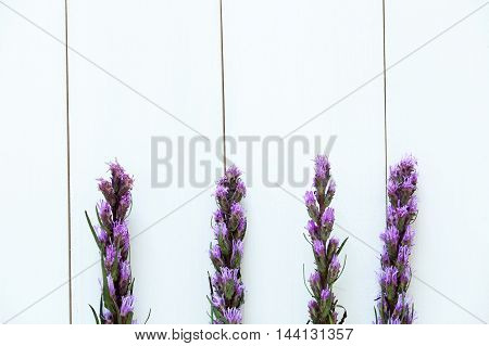 Violet Lavender Flowers On Pure White Wood Background
