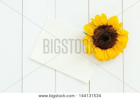 Sunflower And Small Paper On White Wood Texture Background - With Copy Space.