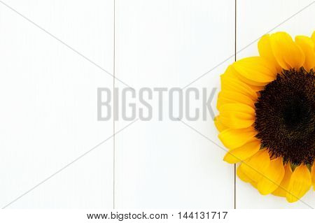 Sunflower Head On Right On Pure White Wood Texture Background - With Copy Space