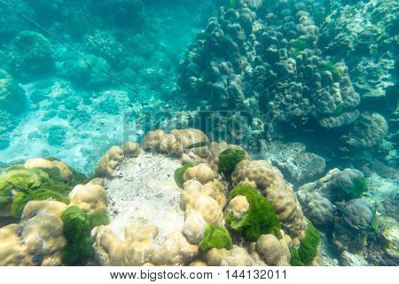 underwater view of coral fish and reef