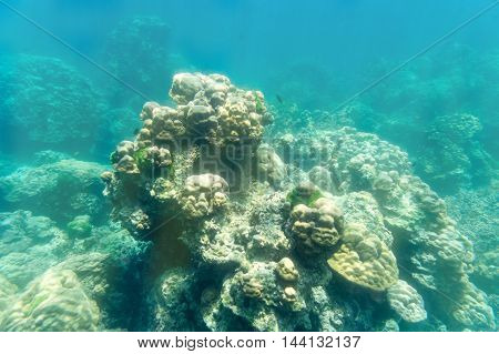 coral stone underwater on sun light for snorkeling sport