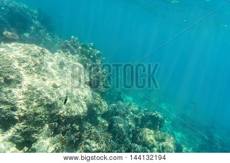 coral and underwater view on sun light into to ground