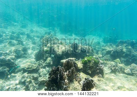 underwater view on sun light coral and fish