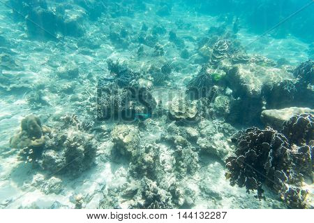 environment of underwater sea coral fish food light